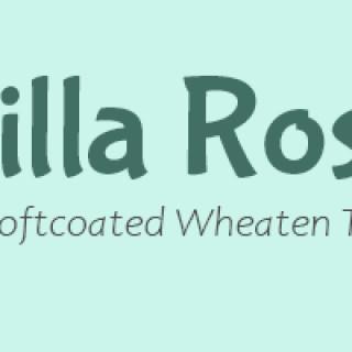 Startsida | Villa Rosa